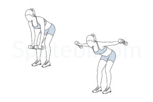 Bent over lateral raise exercise guide with instructions, demonstration, calories burned and muscles worked. Learn proper form, discover all health benefits and choose a workout. https://www.spotebi.com/exercise-guide/bent-over-lateral-raise/