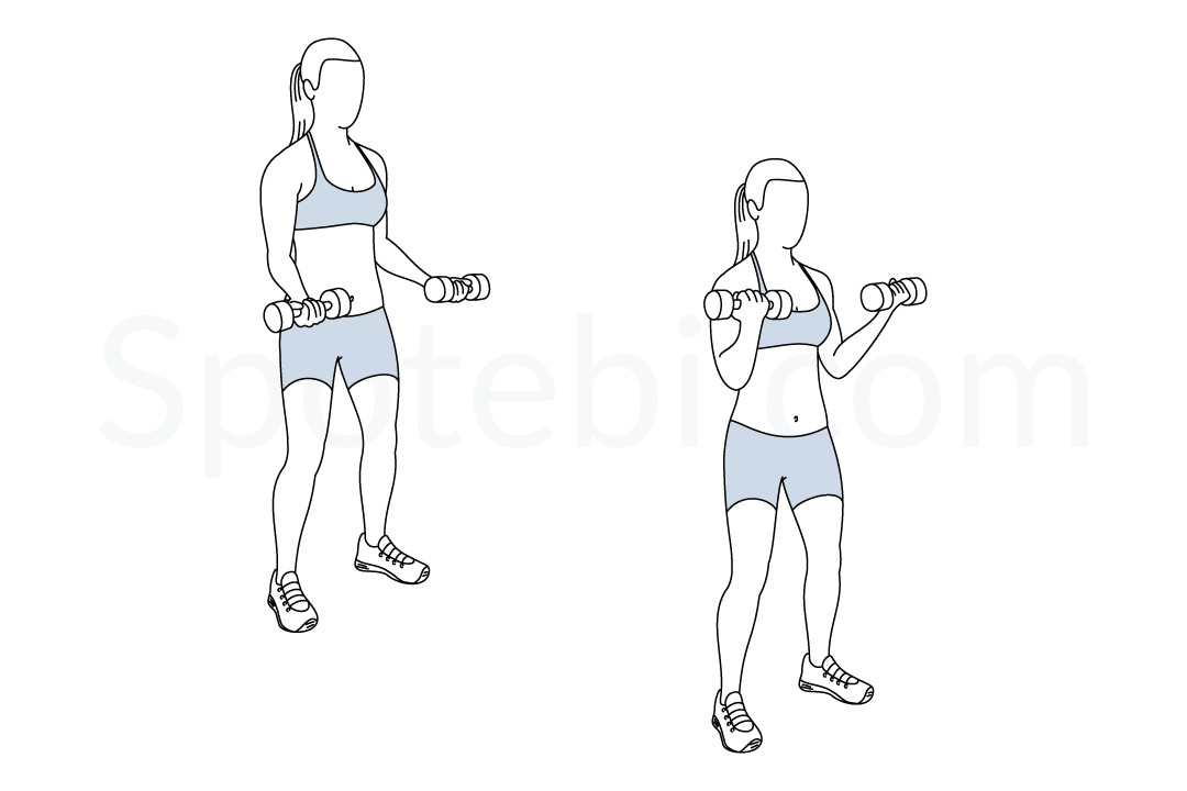 Bicep curls exercise guide with instructions, demonstration, calories burned and muscles worked. Learn proper form, discover all health benefits and choose a workout. https://www.spotebi.com/exercise-guide/biceps-curl/