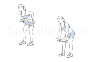 Dumbbell bent over row exercise guide with instructions, demonstration, calories burned and muscles worked. Learn proper form, discover all health benefits and choose a workout. https://www.spotebi.com/exercise-guide/dumbbell-bent-over-row/