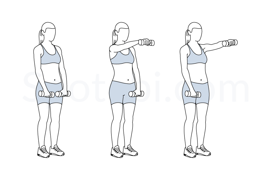 Dumbbell front raise exercise guide with instructions, demonstration, calories burned and muscles worked. Learn proper form, discover all health benefits and choose a workout. https://www.spotebi.com/exercise-guide/dumbbell-front-raise/