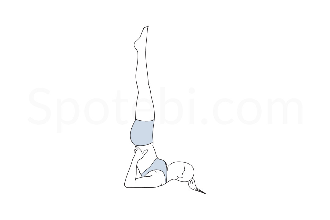 Shoulderstand pose (Sarvangasana) instructions, illustration and mindfulness practice. Learn about preparatory, complementary and follow-up poses, and discover all health benefits. https://www.spotebi.com/exercise-guide/shoulderstand-pose/
