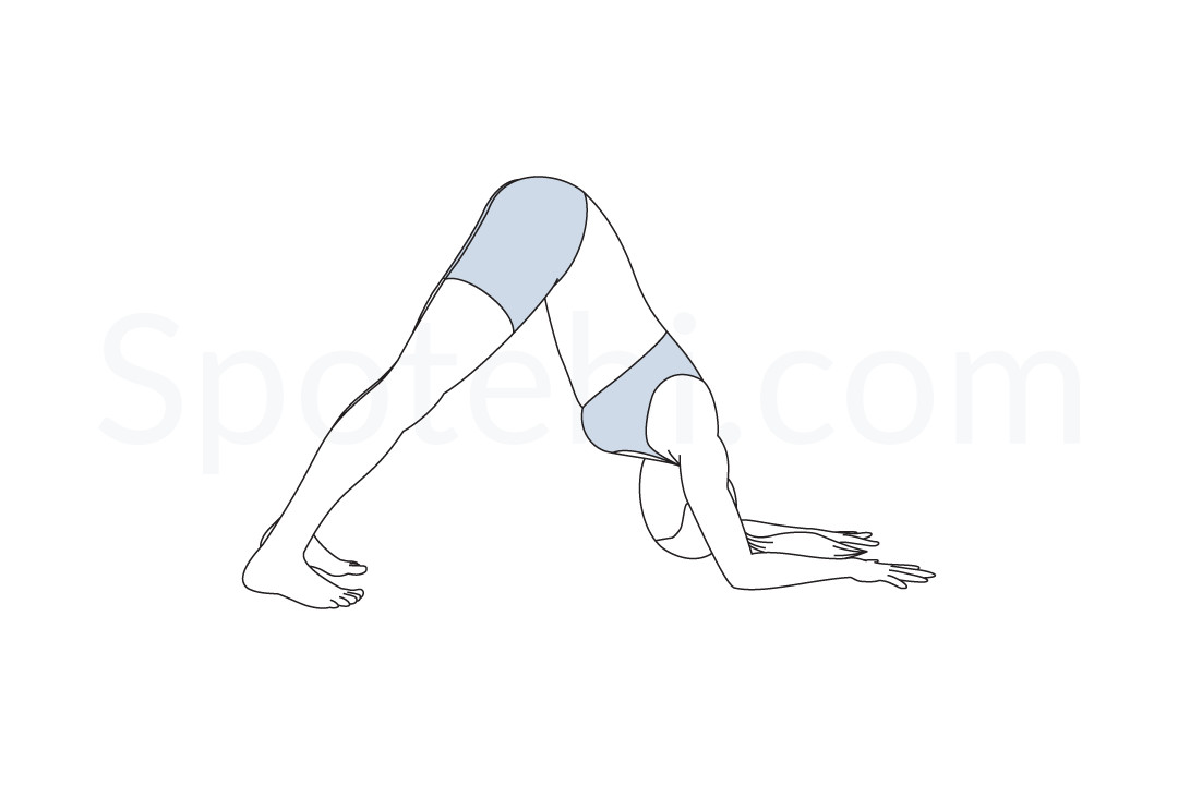 Dolphin pose (Ardha Pincha Mayurasana) instructions, illustration, and mindfulness practice. Learn about preparatory, complementary and follow-up poses, and discover all health benefits. https://www.spotebi.com/exercise-guide/dolphin-pose/