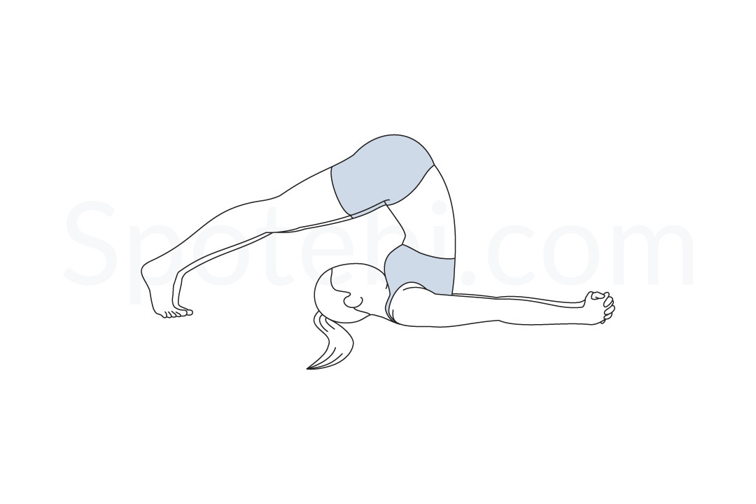 Plow pose (Halasana) instructions, illustration, and mindfulness practice. Learn about preparatory, complementary and follow-up poses, and discover all health benefits. https://www.spotebi.com/exercise-guide/plow-pose/