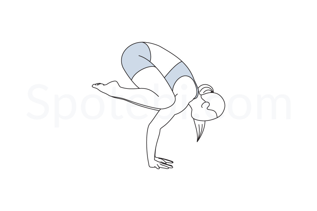 Crow pose (Bakasana) instructions, illustration, and mindfulness practice. Learn about preparatory, complementary and follow-up poses, and discover all health benefits. https://www.spotebi.com/exercise-guide/crow-pose/