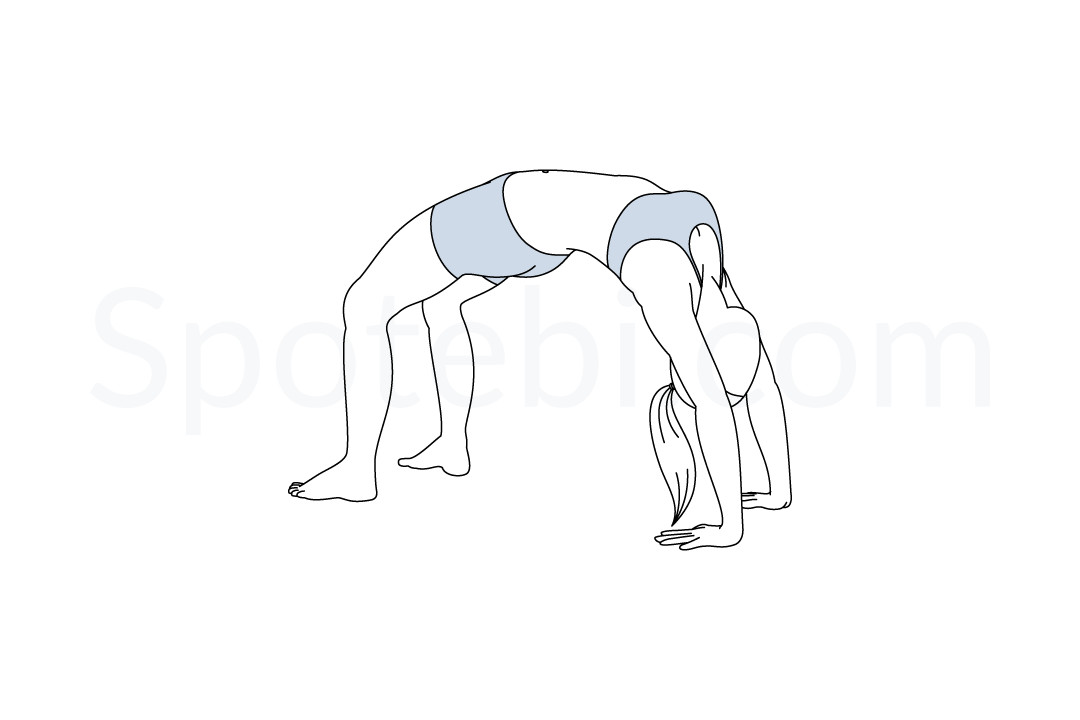 Wheel pose (Urdhva Dhanurasana) instructions, illustration, and mindfulness practice. Learn about preparatory, complementary and follow-up poses, and discover all health benefits. https://www.spotebi.com/exercise-guide/wheel-pose/