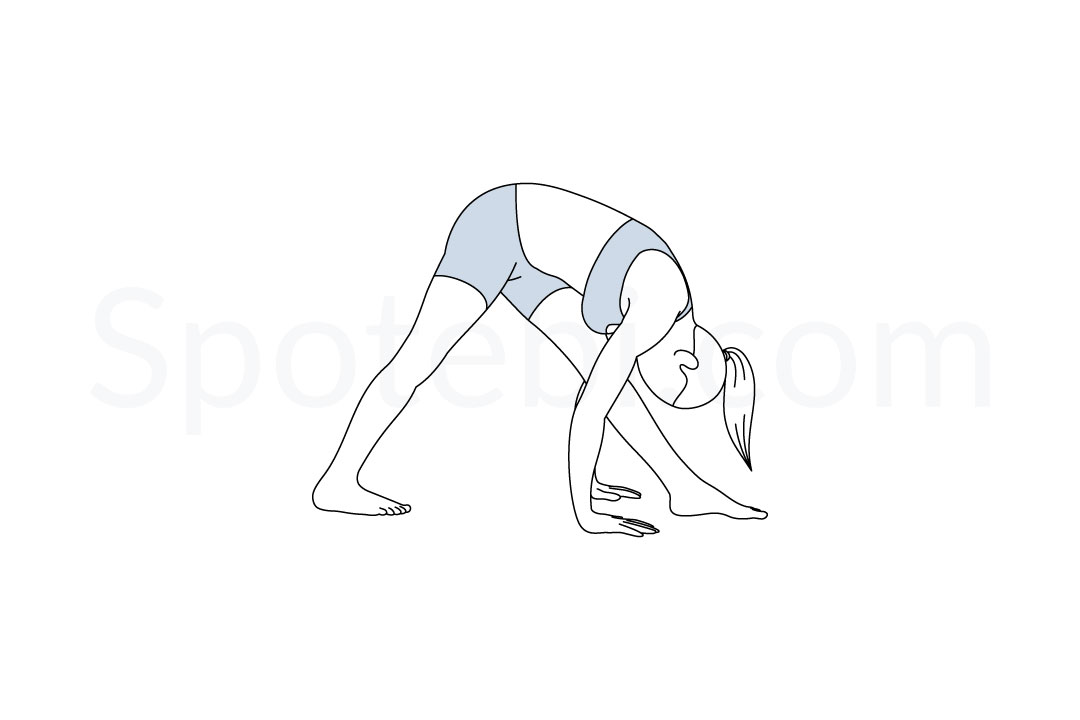 Intense side stretch pose (Parsvottanasana) instructions, illustration, and mindfulness practice. Learn about preparatory, complementary and follow-up poses, and discover all health benefits. http://www.spotebi.com/exercise-guide/intense-side-stretch-pose/