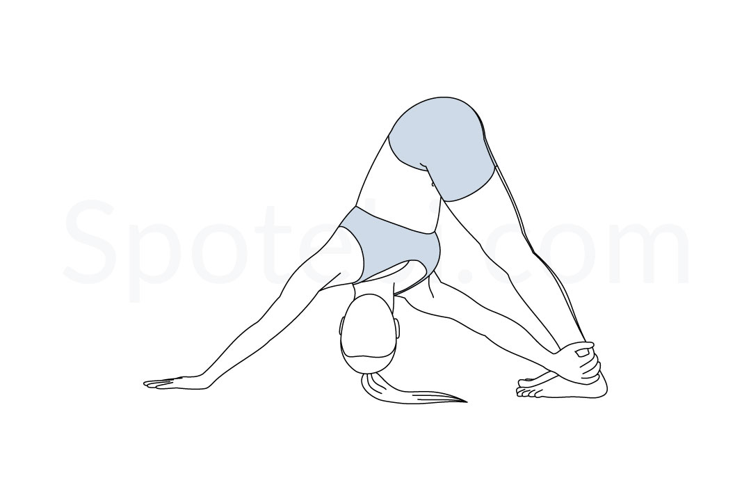 Revolved downward facing dog pose (Parivrtta Adho Mukha Svanasana) instructions, illustration, and mindfulness practice. Learn about preparatory, complementary and follow-up poses, and discover all health benefits. https://www.spotebi.com/exercise-guide/revolved-downward-facing-dog-pose/